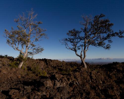 Trees growing in a old lava flow, Kilauea, Hawaii