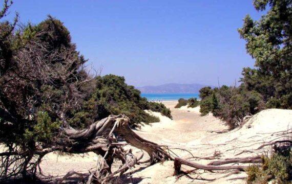 Κέδροι - Νήσος Χρυσή